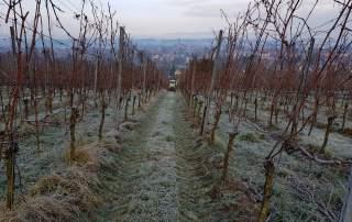 Winter Weinberge Weingut Faber Freiburg