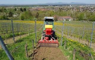 Natürliche Bodenbearbeitung Weingut Faber Freiburg