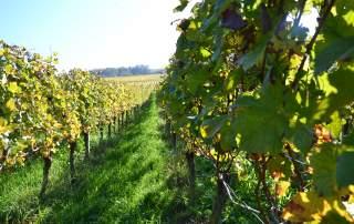 Herbst Weingut Faber Freiburg
