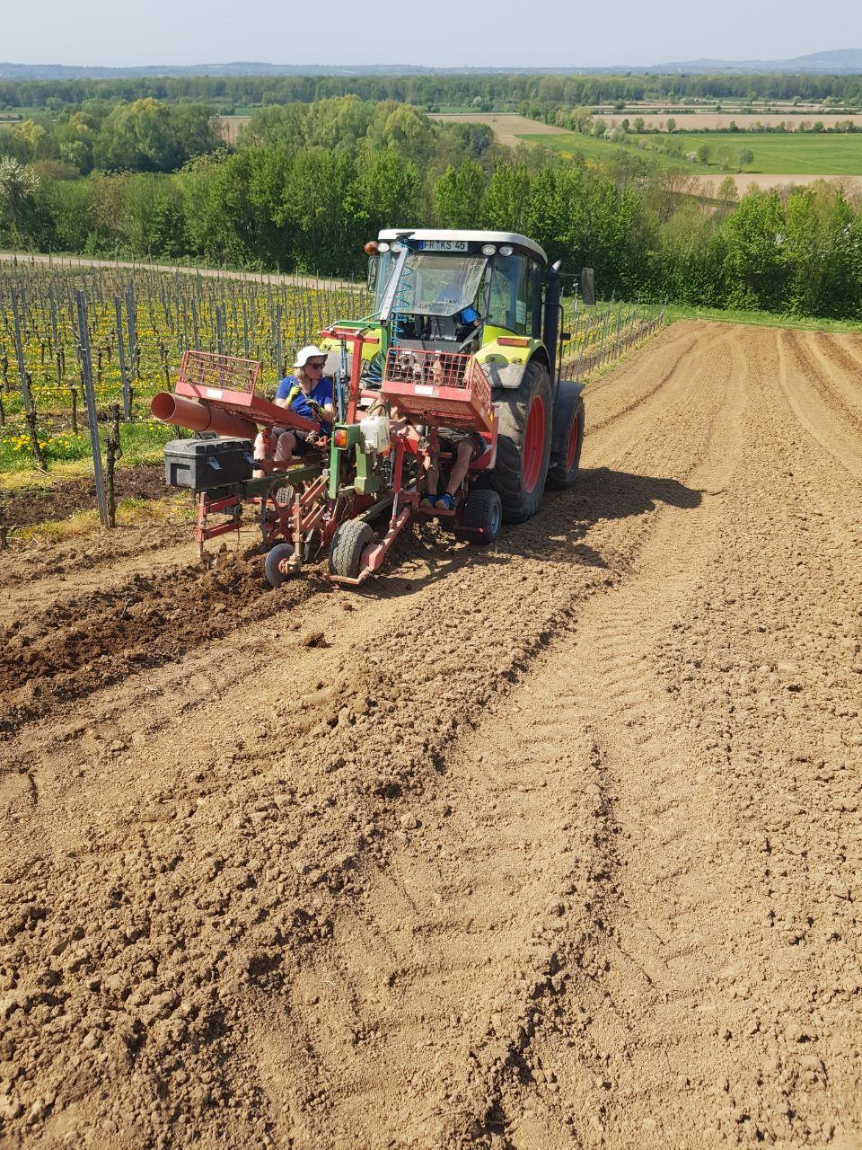 Rebpflanzung Weingut Faber Freiburg