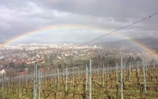 Regenbogen Weingut Faber Freiburg